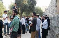 100مستوطن صهيوني يقتحمون باحاتِ المسجد الأقصى تحت حراسة مشددة لقوات العدو الصهيوني .